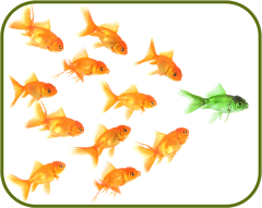 Fish_for_leadership