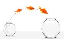 jumping_fish